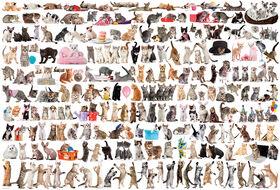 Eurographics Variety 2000 Piece World Of Cats