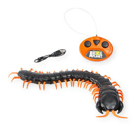 Animal Planet - Radio Control Giant Centipede