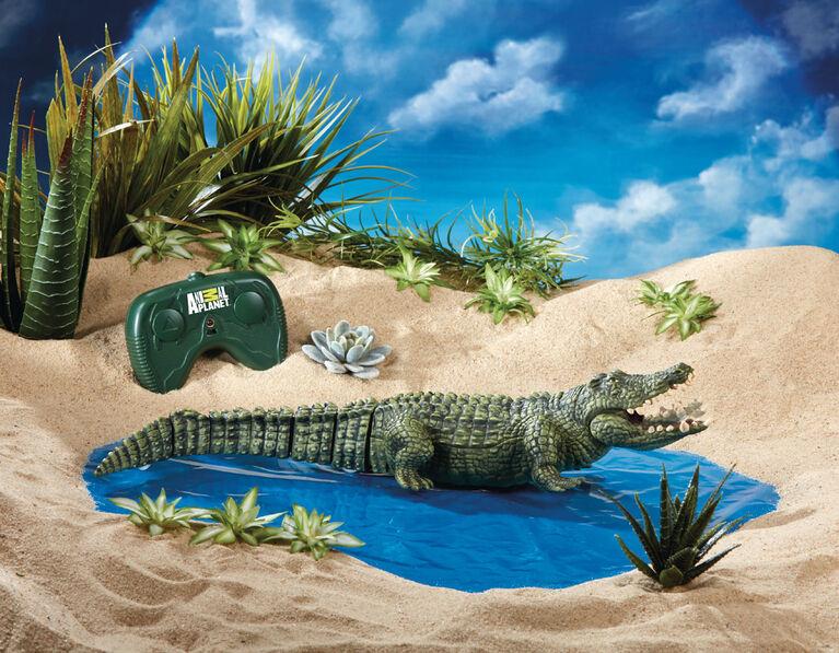 Animal Planet - Alligator télécommandé - Notre exclusivité