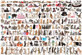 Eurographics Variety 2000 Piece World Of Cats