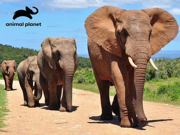 Animal Planet - Elephant – 500 Piece 3D Puzzle - R Exclusive