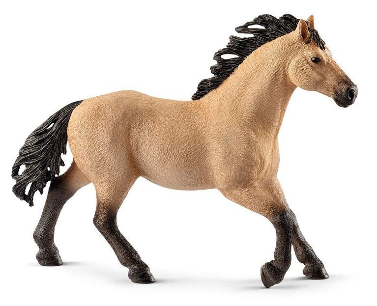 Horse Club - Quarter Horse Stallion