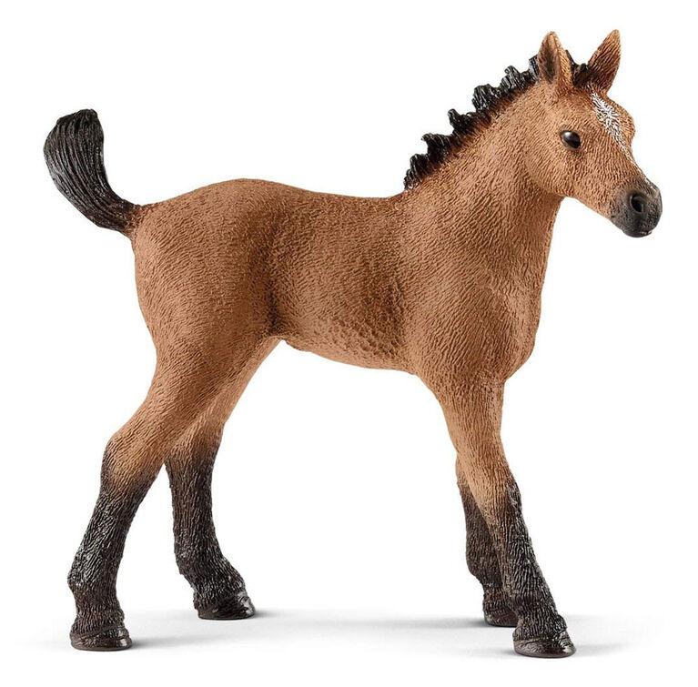Horse Club - Quarter Horse Foal